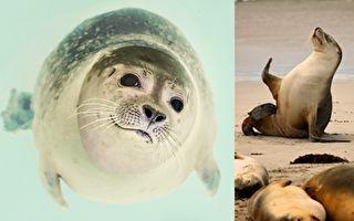 NOAA警告:千萬別和小海豹合照 原因是這樣