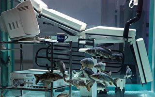 价值180万镑的鱼缸。( Jack Taylor/Getty Images)
