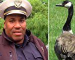 野雁不停啄巡邏車 警官跟隨牠到溪邊大爲驚愕