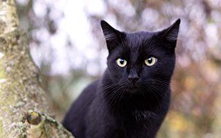 新西兰男子绑架邻居的猫还喂药 真相竟如此