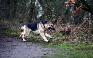 不再讓你孤單 主人帶愛犬散步上演超驚喜邂逅