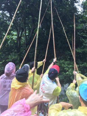 一群人仰望高高的橄欖樹,拿著長竹竿在樹底下拼命的敲,這就是橄欖的採收方式,也是有趣的體驗。(新竹縣政府提供)