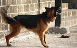 狗狗有攻击性被栓铁链 当有人要带它走 奇迹发生