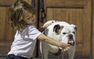 4歲童面對一群飢腸轆轆的鬥牛犬 旁邊就是狗糧