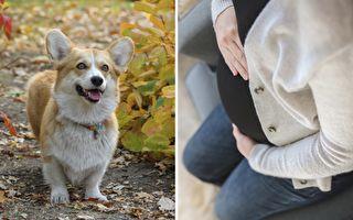 韓星夫婦13年無子 愛犬癌逝2月 驚喜降臨
