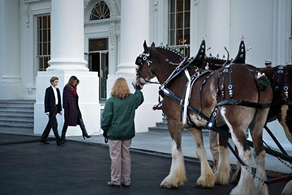 一(11月20日),美国第一夫人梅拉尼娅(Melania Trump)和儿子巴伦(Barron)一起,欢迎今年的白宫圣诞树。(AFP PHOTO / Brendan Smialowski)