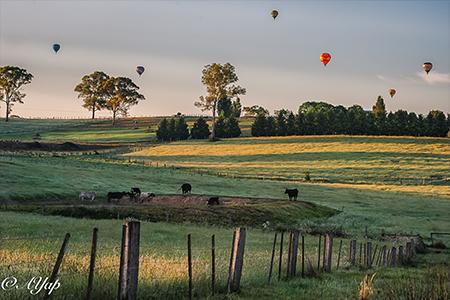 Go Wild热气球通常在墨尔本Yarra Vally的葡萄园草场起飞,充满田园气息。(Go Wild提供)