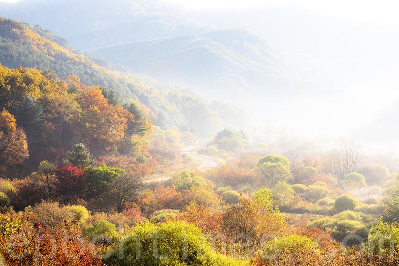 韓國江原道秘密庭園 霧景彷如水彩畫