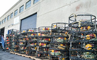加州捕蟹季可能又將推遲