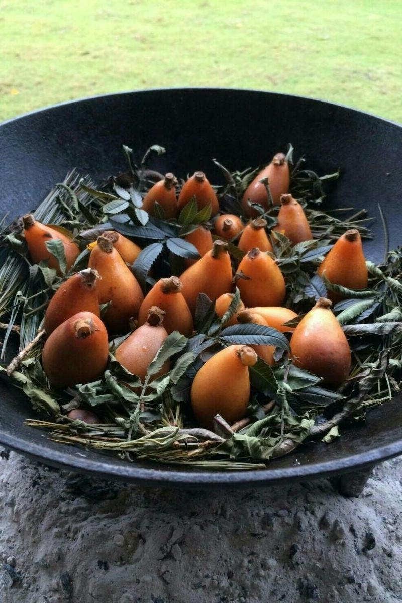 用五叶松及红刺葱铺底再放枇杷进烤箱,有独一无二的好味道。(马爱云提供)