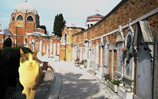 小貓屢遭丟石驅趕 每天仍堅持送「禮」去公墓