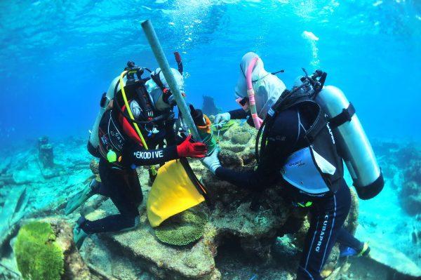 东沙尖齿柠檬鲨研究人员安装海域讯号接收器之过程。(海管处提供)