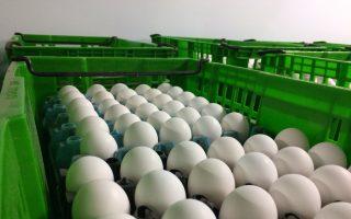 兩億雞蛋染沙門氏菌 流入美國九個州