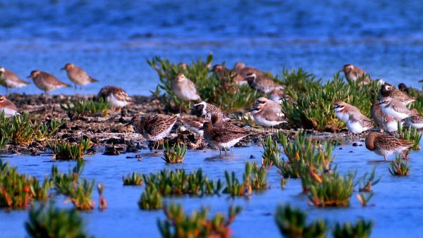 东沙岛汇聚来自四面八方的迁移性物种,在此繁衍兴盛。(海管处提供)