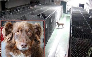 大狗深夜逃出狗旅馆的笼子 竟因为一个超暖心的原因