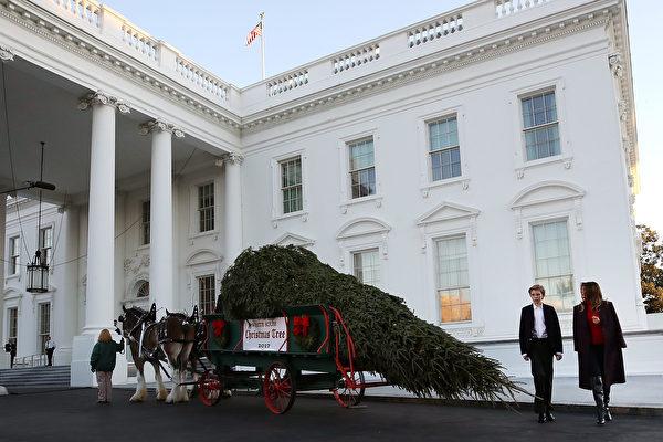 组图:梅拉尼娅和儿子巴伦迎接白宫圣诞树
