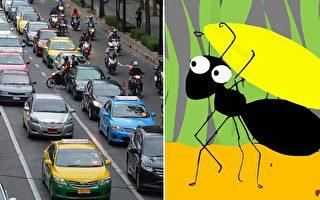 研究:蚂蚁不塞车 且越挤走越快