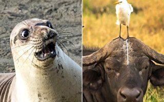 喜剧野生动物摄影大赛:这些作品太有喜感!