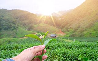 美醫博士:人體與植物相似 日曬可吸收光能