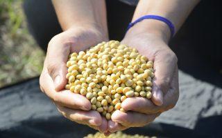 中共自曝大豆产需缺口九千多万吨 需进口