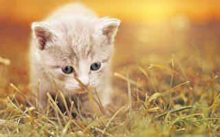 想养猫趁现在!维州猫咪领养费降至39澳元