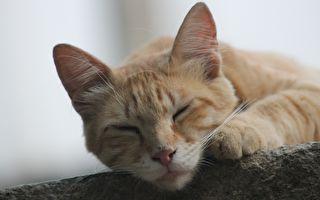 韓國小貓超有愛心 照顧傷殘同伴無微不至