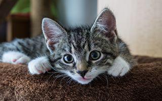 女娃及小貓咪相依偎 融化近300萬網友的心