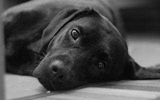 动保法三读 虐待动物致死最重判2年