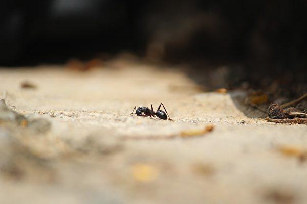 小螞蟻在小男孩的引領下找到了蟻群。示意圖。(pixabay)