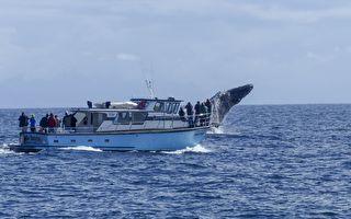 亲眼所见 大鲸鱼向人类求救 少年叫它靠近一点