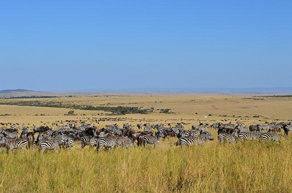 马赛马拉国家公园,位于肯亚,是世界上最著名的野生动物保护区。(Lafesta/CC/Pixabay)