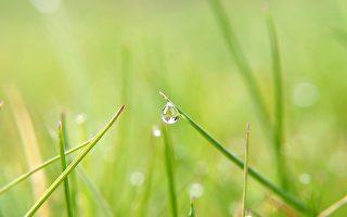 唐浩:雨中春