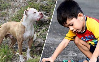全家以為狗會救主 沒想到狗找到 2歲童不在 原因卻爆讚