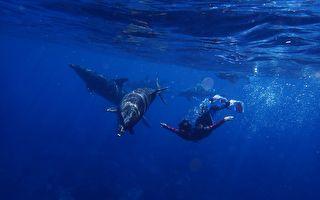 海豚游近潜水者久久不去 仔细一看他们恍然明白缘由