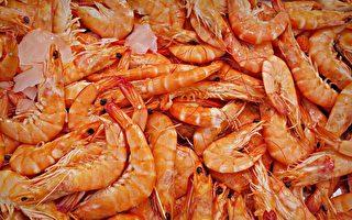 聖誕節期間,熱門的澳洲野生大蝦的單價會漲5至7澳元。(Pixabay)