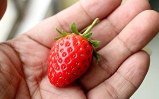 他在手掌上放一顆草莓 換個角度看「真是太神奇了」!