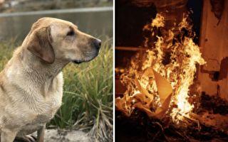消防员冲进火宅找到昏迷狗狗 为它身下的东西震撼