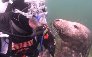 海豹拉住潜水员 一个翻身小动作融化摄影师的心