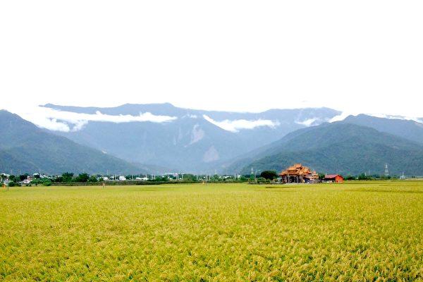 探訪花東縱谷全台最直公路及金黃稻浪