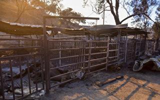 南加州大火肆虐 近70匹纯种马葬身火海