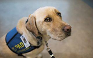 帮助受虐孩子 安慰犬首次在海洋省持证上岗