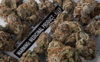 加拿大推大麻合法 醫生學會拿出反對證據