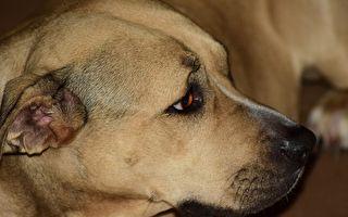 狗狗焦急过街搬救兵 兽医前往救援目睹超感人画面