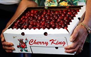 雨天致收成減半 聖誕假期櫻桃價格恐上漲