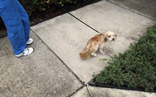 不撿狗便罰500元 墨爾本一市政廳新法惹爭議
