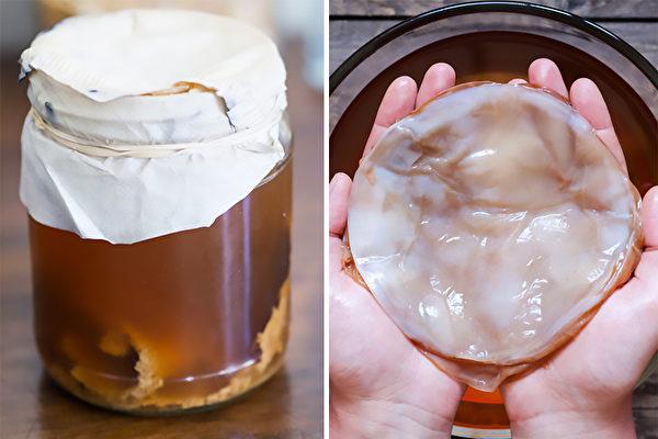 紅茶菌又稱紅茶菇、冬菇茶或康普茶,有諸多功效。右圖為菌膜。(Shutterstock)