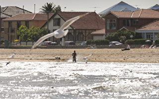 三日暴雨污染墨爾本海灣 本週不宜到海灘游泳