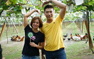 生物防治盖温室 葡萄成熟不够卖