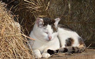 猫咪葬身火海 全家悲痛 没想到7周后传来惊人消息