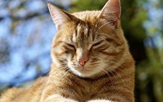 貓味褪散!這5種氣味讓貓咪不敢再靠近